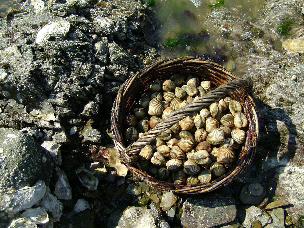 Calendrier Des Marees Noirmoutier.Les Grandes Marees Tourisme Noirmoutier Sejour Ile De